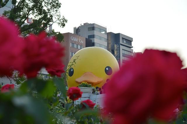 121021_duck01