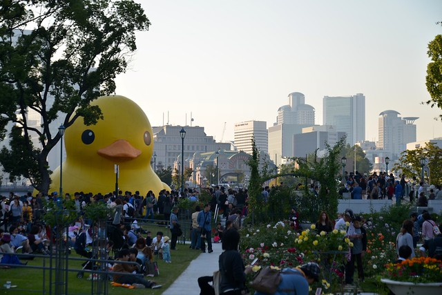 121021_duck02