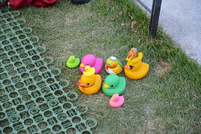 121021_duck08